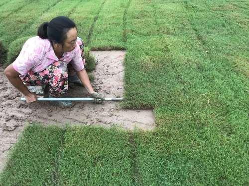 幼儿园用天然草坪好还是人造草坪好?