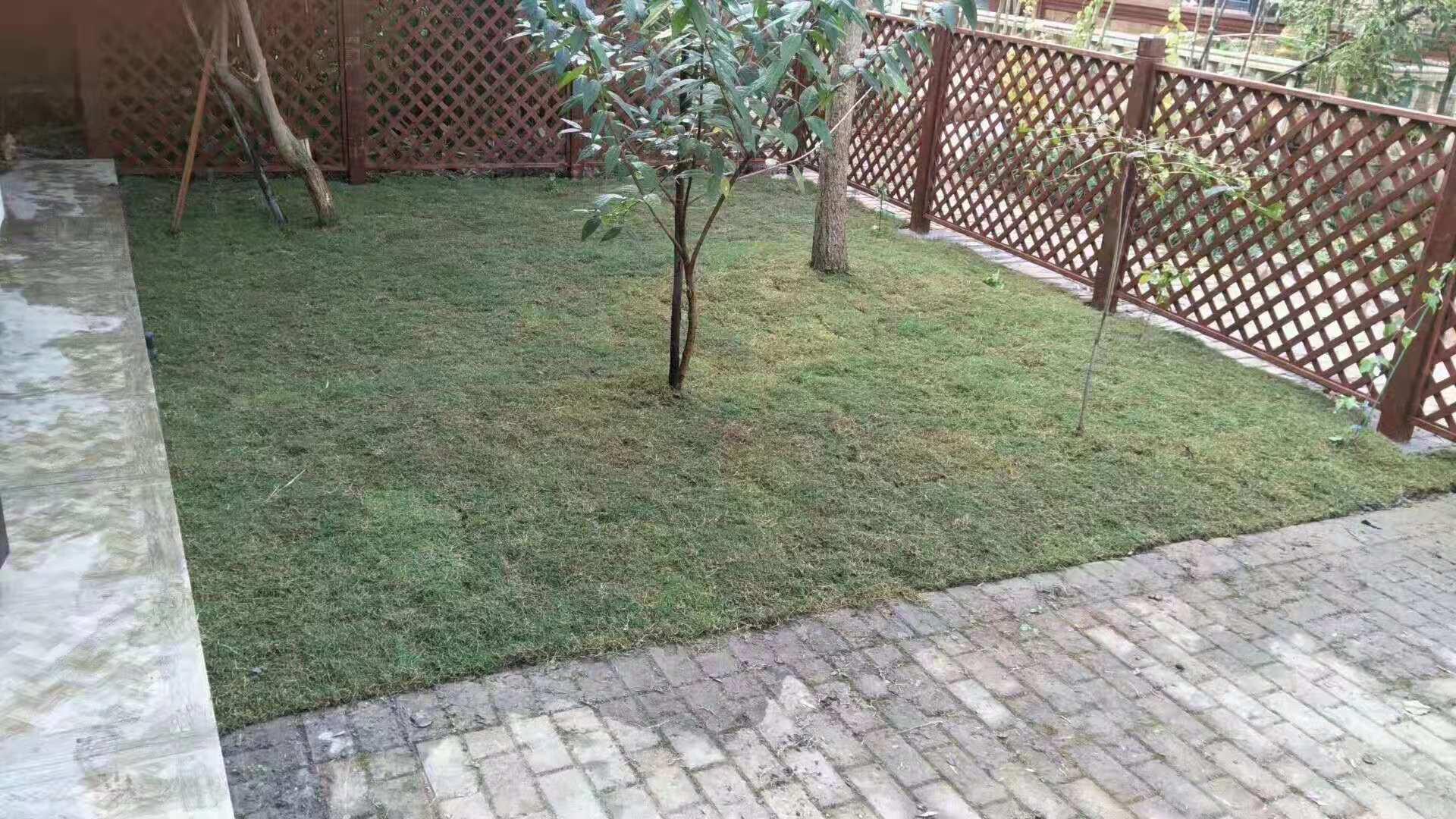 庭院中的草坪
