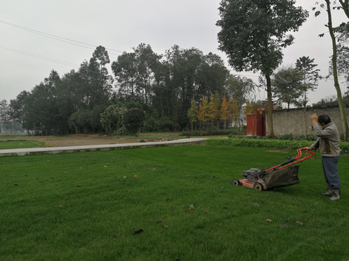 草皮铺种的草坪